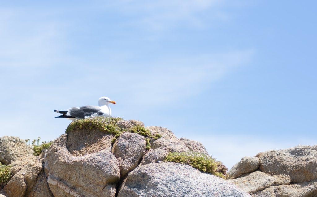 岩の上に鳥